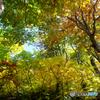 ステンドグラスの森