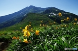 夏山と花Ⅴ