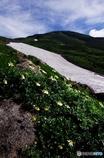 夏山と花Ⅷ