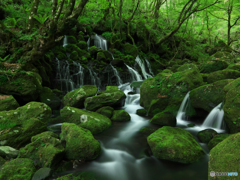Moss  world...Ⅲ