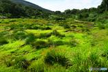 シラタマの木湿原