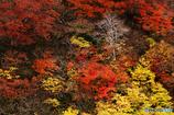 岳樺・秋彩の中で