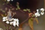 小さな花に幸せ求め
