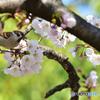 雀さんも春