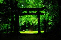Green space - 癒しの空間 -