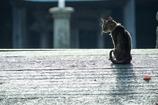 普賢寺の猫