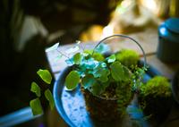 KODAK ProBack645で撮影した(観葉植物)の写真(画像)