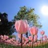 花びらを太陽に