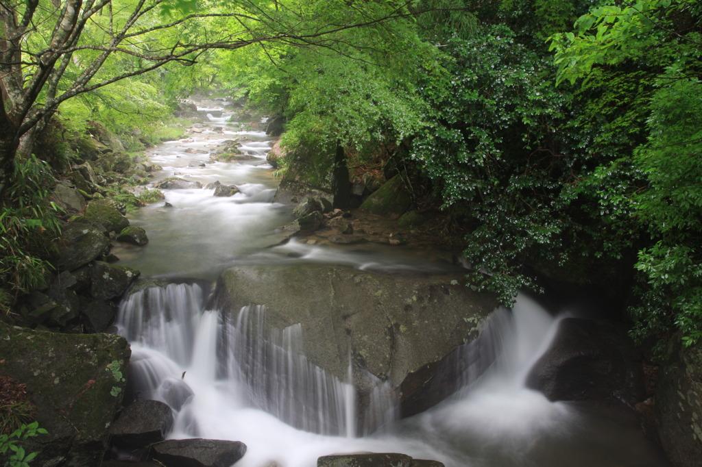 深緑の渓流_2
