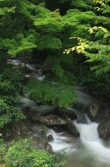 深緑の渓流_1