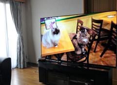 4K有機ELテレビ65型がやってきた