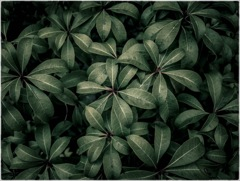 植物実験 #67
