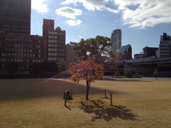 都会の木立
