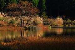平池秋景_3
