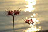 琵琶湖のキラメキ
