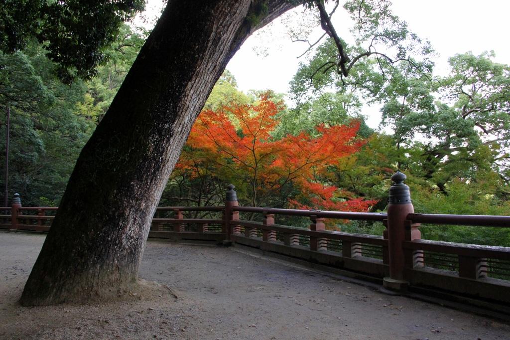 秋色みっけ♪