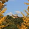 『松山城×銀杏』