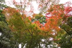 紅葉狩り 4