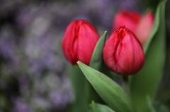 蒼に咲く赤