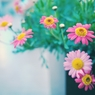 春の詩(うた)
