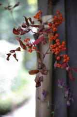 明月院 秋の色
