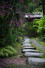 鎌倉の秋 萩の花が