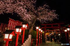 針綱神社の夜桜
