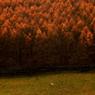 晩秋の牧場