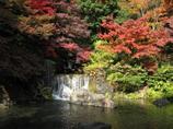 日本庭園 滝