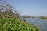 木津川(右)と宇治川(左)の合流