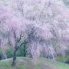 春の淡雪 〜其の二〜