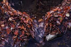 落ち葉の堰