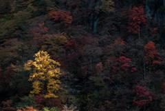 Autumn Rhapsodie