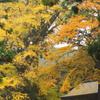 秋を求めて「雷神社」