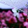 雨は冷たいけど・・・