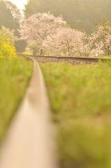 春色に染まる鉄路