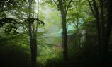 静寂の森の中で