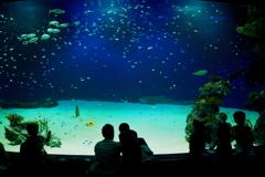 マリーナホップ 水族館