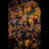 秋の十勝岳を望遠で撮りました。柄にもない一枚で恐縮です。
