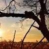 夕陽とノア