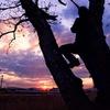 木の上のおとんと夕焼け