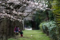思い出の桜道