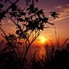 屋久島灯台の夕日