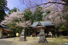 櫻川磯部稲村神社-2