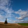 CANON Canon EOS 5D Mark IIで撮影した風景(Last Summer Tree)の写真(画像)
