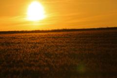 太陽がくれた季節