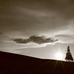 CANON Canon EOS 5D Mark IIIで撮影した(秋を感じて・・・(Sepia Version))の写真(画像)