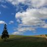 CANON Canon EOS Kiss X6iで撮影した風景(Summer Tree)の写真(画像)