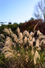 紅葉の三渓園