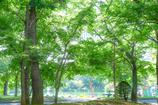 中島公園7